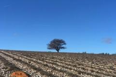 Plateau d'Albion Décembre 2019