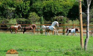 Du cheval aux chevaux-vapeur